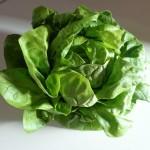 salade verte4